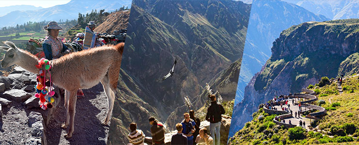 Tour Cañón del Colca - Vista de los Cóndores
