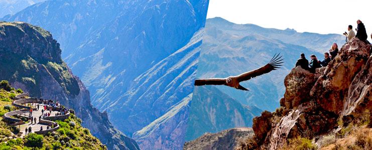 Tour Cañon del Colca vista de cóndores