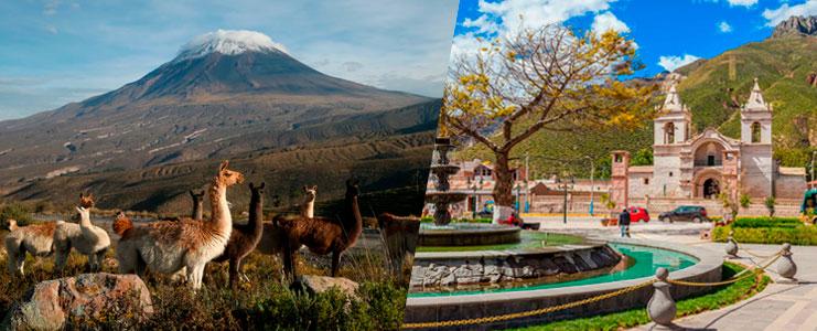 Tour Cañon del Colca - Reserva de Vicuñas
