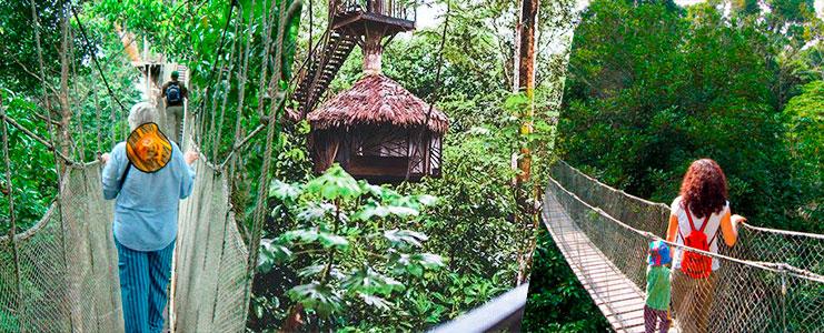 Tour Reserva Yanamono